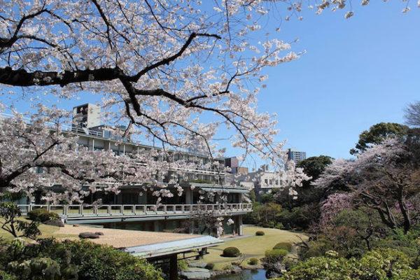 国際文化会館 / アイハウスの日本庭園バーチャルツアー(2021桜編)