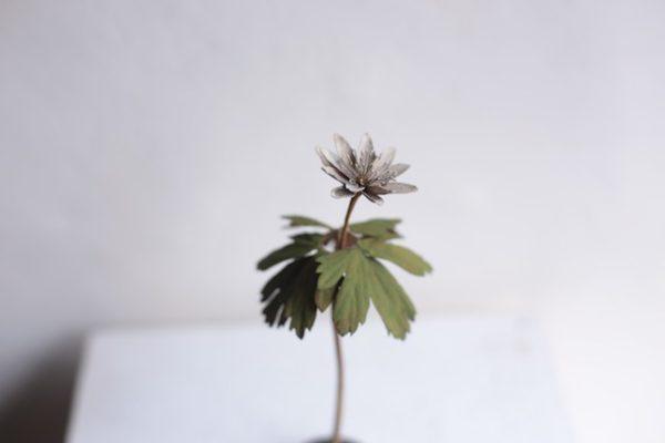"morison kobayashi exhibition""small plants"""